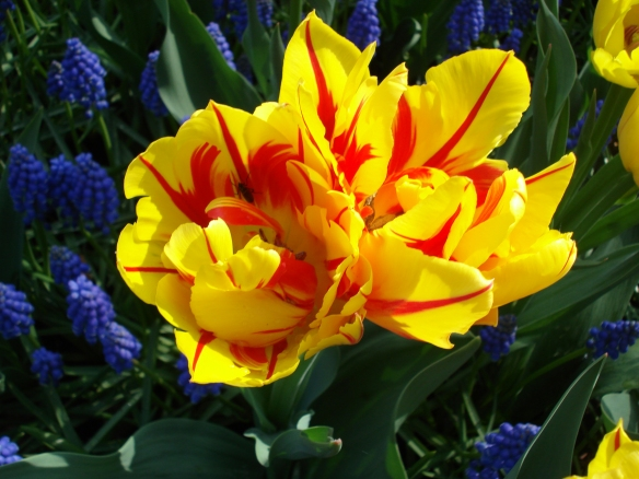 Close up tulips - by Porch of the Lord