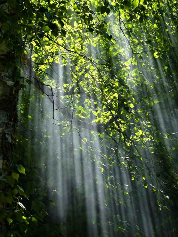 forest-sunbeams-trees-sunlight-70365.jpeg
