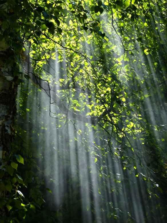 forest-sunbeams-trees-sunlight-70365.jpeg